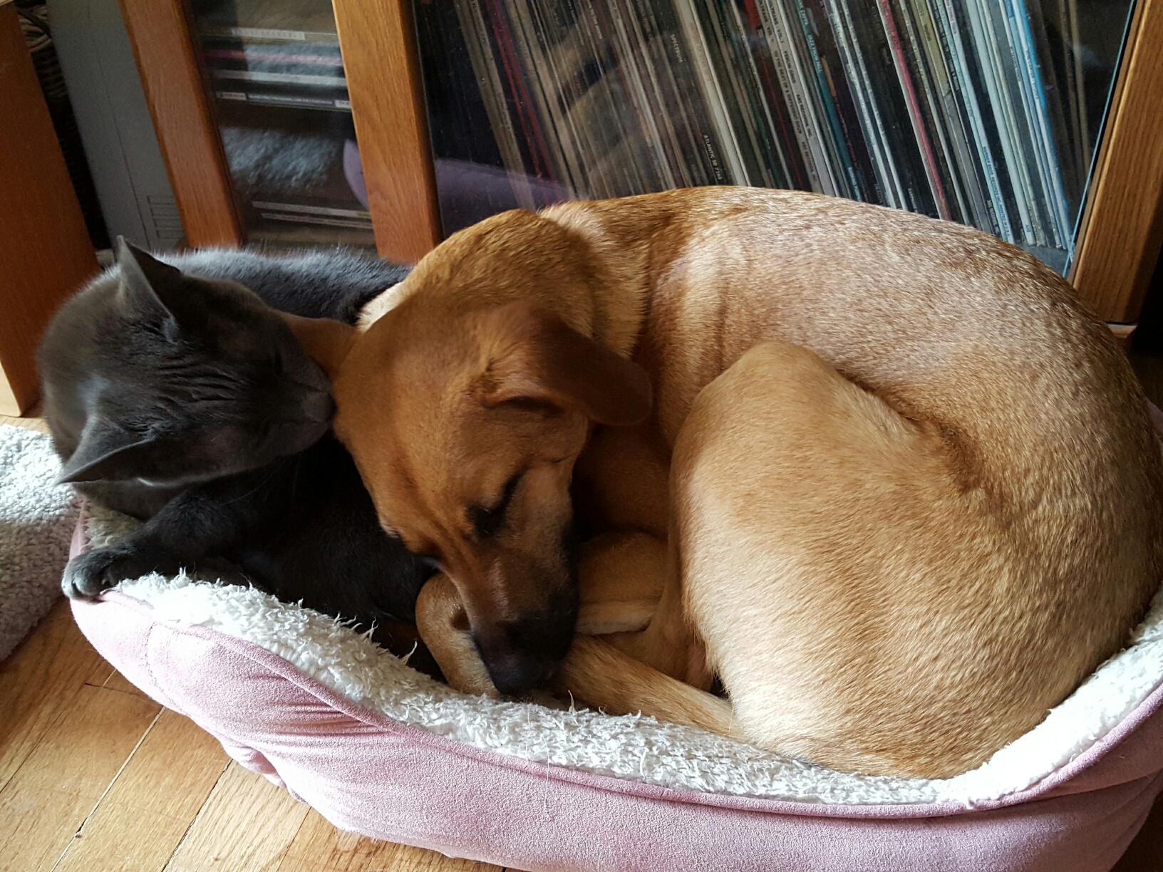 Lucy & Sadie 12-28-15 (2)